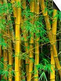 Bamboo Plants Posters by John & Lisa Merrill