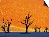 Dead Trees in Dead Vlei Prints by Frank Krahmer