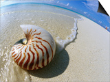 Seashell Resting on Shore Poster by Leslie Richard Jacobs