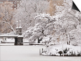 Snow covered trees with a footbridge in a public park, Boston Public Garden, Boston, Massachusetts, Prints by Mark Hunt