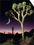 Crescent Moon and Joshua Tree Prints by Richard Cummins