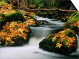 Goldstream Creek, Goldstream Creek Provincial Park, Vancouver Island, British Columbia, Canada. Posters by John E Marriott