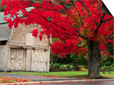 Tree with Red Leaves and Barn Print by Mark Karrass