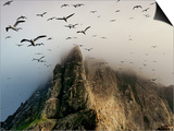 Cloud covers a sea bird rookery high on a sea stack cliff Print by Jim Richardson