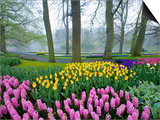 Spring Flowers in Flower Garden Prints by Jim Zuckerman