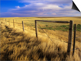 Fence Along Field, South West Saskatchewan, Canada Prints by Mike Grandmaison