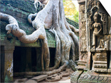 Tree roots overtaking Ta Prohm at Angkor Prints by José Fuste Raga