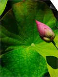Lotus flower at Bang Pa-in Summer Palace in Thailand Posters by Bruno Ehrs