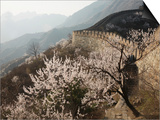 Cherry blossoms along the Mutianyu section of the Great Wall Posters by Guo Jian She