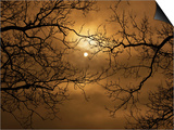 Branches Surrounding Harvest Moon Print by Robert Llewellyn