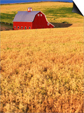Red Barn on Rolling Hills Poster by Stuart Westmorland