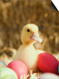 Duckling with Easter Eggs Print by Ada Summer