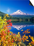 Autumn Leaves Growing Near Mount Hood and Trillium Lake Art by Craig Tuttle