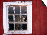 Cat sitting in a barn window Prints by Scott Barrow