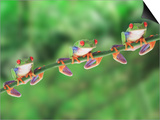 Red-Eyed Tree Frogs on Branch Prints