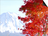 Mt. Fuji and Japanese maple tree in autumn, Yamanashi Prefecture, Honshu, Japan Posters