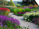 Path in Trentham Gardens Prints by Clive Nichols