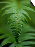 Fern Leaf Prints by Doug Wilson