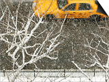 Yellow cab on Park Avenue in a snowstorm Poster by Bo Zaunders