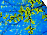 Spring Leaves, Irving Nature Park, Saint John, New Brunswick, Canada Art by  Barrett & Mackay
