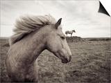 Horses in Field Prints by Angela Drury