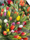 Bunches of colorful tulips Prints by Markus Altmann
