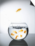 Goldfish jumping out of a bowl and escaping from the crowd Posters by Steve Lupton