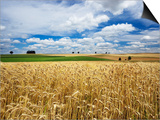 Wheat Field Under Cloud Filled Sky Posters by Frank Krahmer