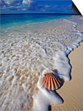 Scallop Shell in the Surf Poster by Martin Harvey