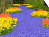 Flowers at Keukenhof Garden Posters by Jim Zuckerman