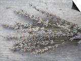 Lavender Prints by Tammy Hanratty