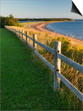 Caribou-Munroes Island Prov Park Nova Scotia, Canada. Posters by Darwin Wiggett