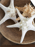Starfish in a basket Print by Felix Wirth