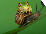 Tree Frog Resting on Snail's Shell Art by David Aubrey