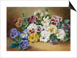 Pansies Prints by Thomas Frederick Collier