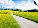 Road through dandelion fields Prints by Frank Lukasseck