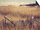 Cape Cod Sandunes Prints by Jennifer Kennard