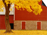 Autumn Tree by Red Barn Posters by Bob Krist