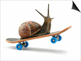 Snail Riding Skateboard Prints by Martin Gallagher