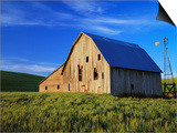 Old Barn and Spring Wheat Field Print by Terry Eggers