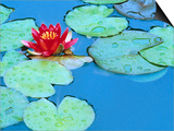 Lily Pads and Flower Blossom Prints by Cindy Kassab