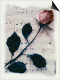 Rose and Music Poster by Kim Koza
