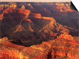 Grand Canyon Bathed in Sunlight Prints by Shubroto Chattopadhyay