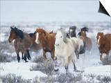 Wild Horses in Snow Poster von Jeff Vanuga