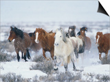 Wild Horses in Snow Posters by Jeff Vanuga