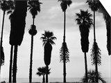 Palm Trees in Silhouette, California, 1958 Prints by Brett Weston