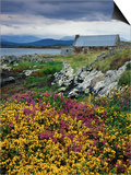 Flowers Along Carna Bay Print by Richard Cummins