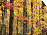 Hardwood Forest in Autumn Posters by James Randklev