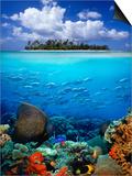 Underwater Scene in the Tropics Prints by Gray Hardel