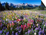 Wildflower Meadow and Tatoosh Range Posters by Craig Tuttle